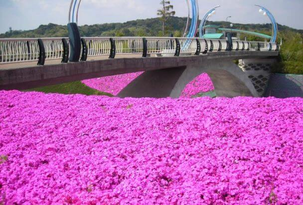 中央総合公園に咲くツツジ