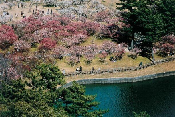 梅の木が広がる南公園の広場